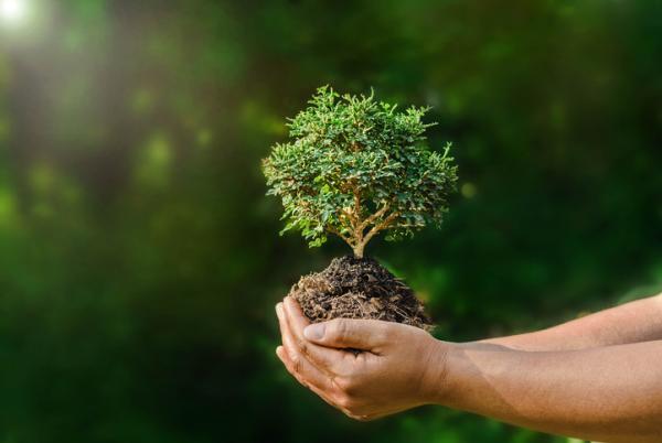 """Percorso di educazione al consumo eco-logico """"Dal superfluo al naturale"""""""